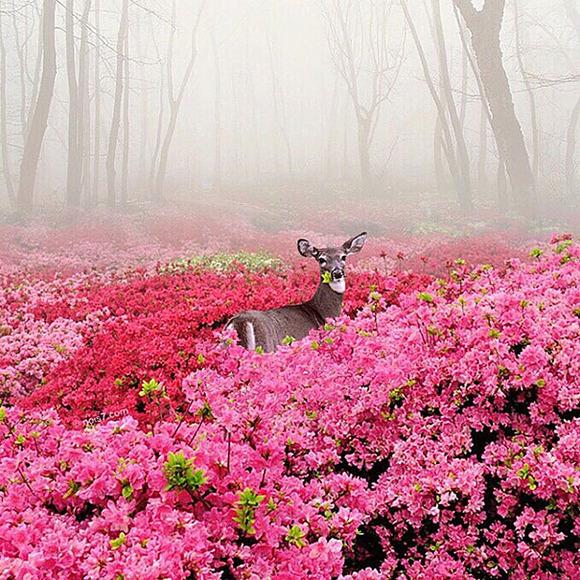 colourful-surreal-photography-robert-jahns-19