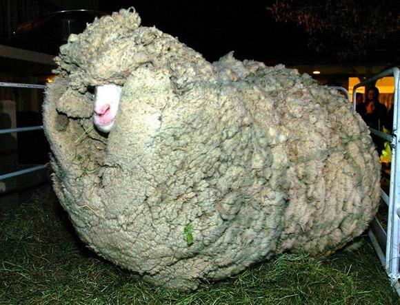 shrek-the-sheep-3%255B6%255D