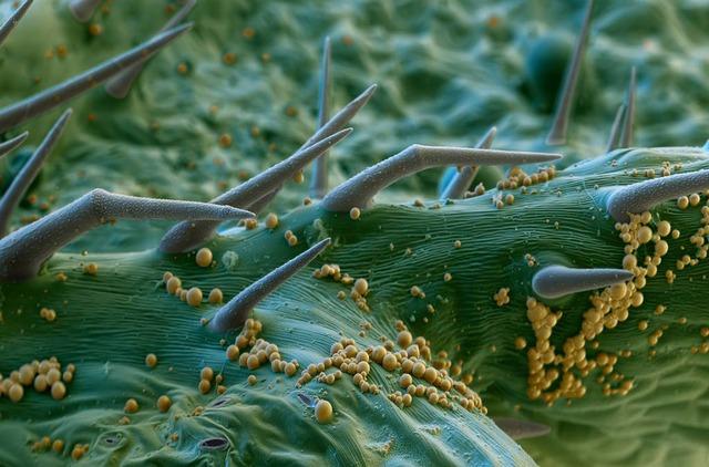 electron microscope image creeping thistle (1)