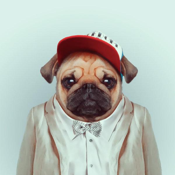 16-animal-portrait-photography