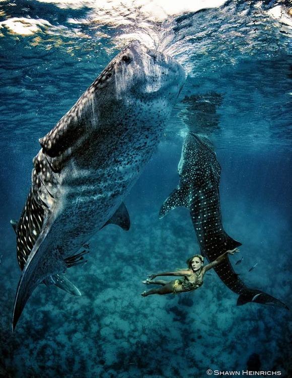 Shawn-Heinrichs-photography-underwater-14