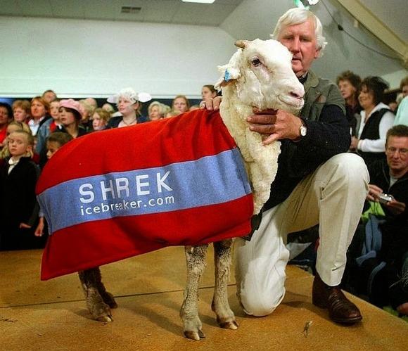 shrek-the-sheep-2[6]