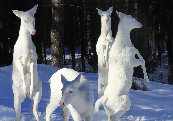 albino-animals-3-1__880