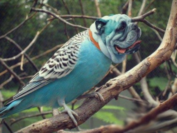 Birds-with-Dog-Heads-10