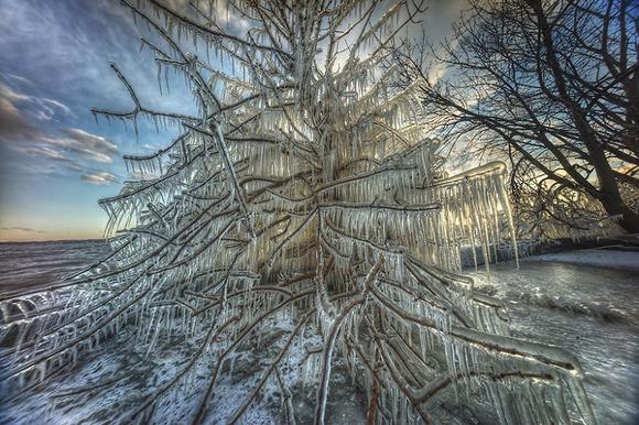 christmas-tree2__880