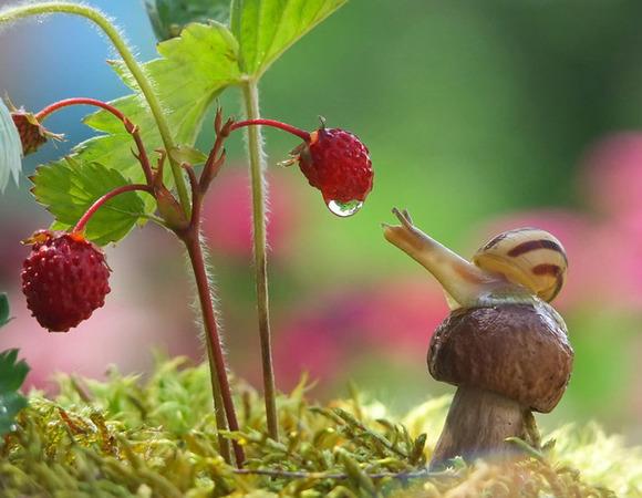 macro-photography-snails-vyacheslav-mishchenko-5