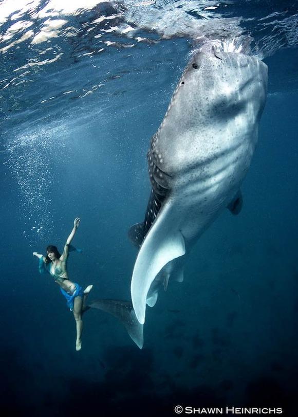 Shawn-Heinrichs-photography-underwater-3