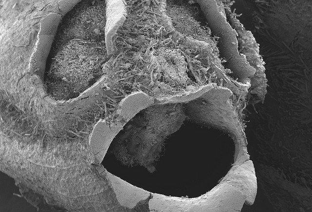 snapgdragon seed pod skull dragons skull 1
