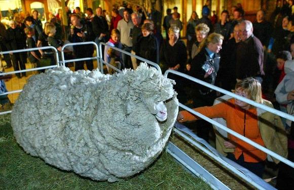 shrek-the-sheep-9[6]