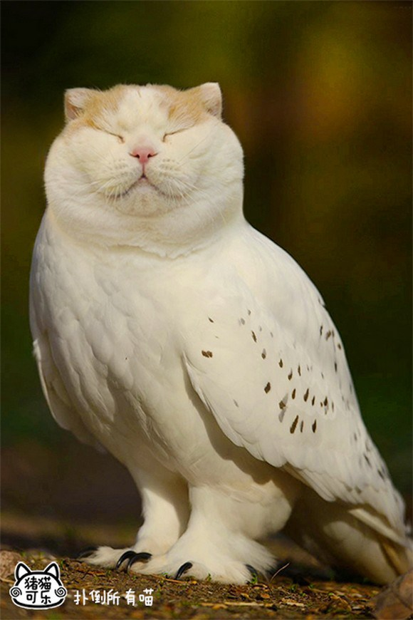 Cat-and-Owl-Combine-Meowl-6