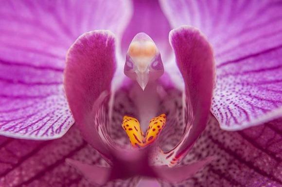 flowers-look-like-animals-people-monkeys-orchids-pareidolia-10