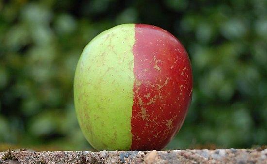 Rare-2-Tone-Apple-Ken-Morrish-03