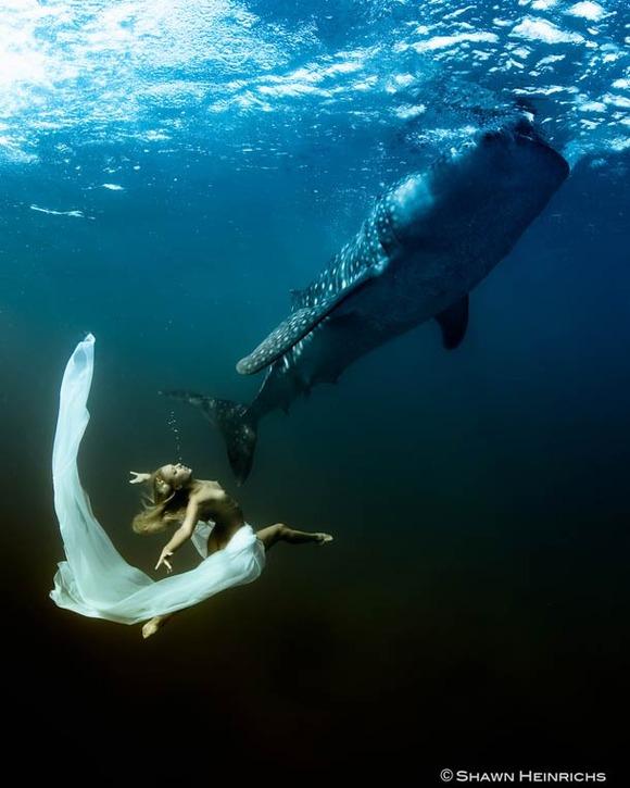 Shawn-Heinrichs-photography-underwater-9
