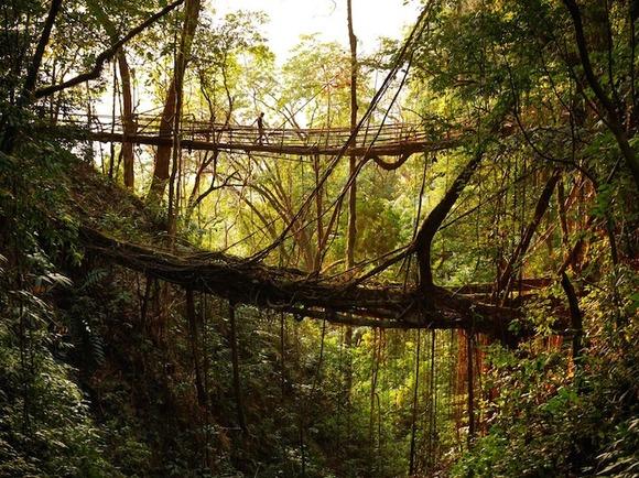 treerootbridge02