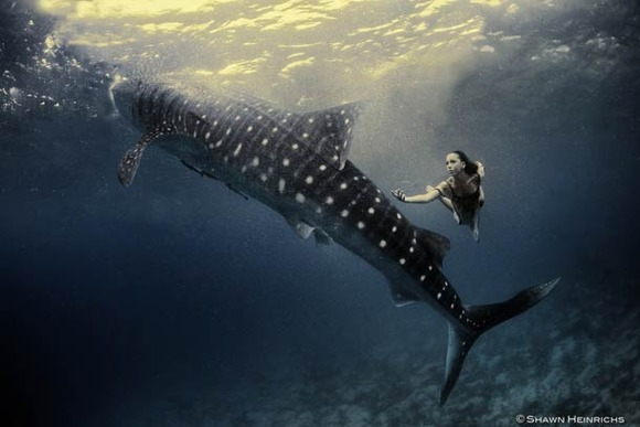 Shawn-Heinrichs-photography-underwater-12