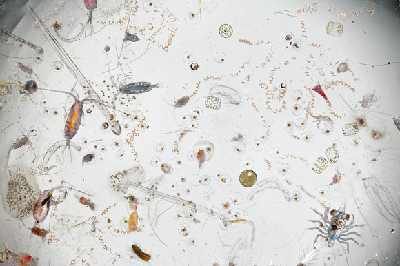 sea-water-magnified-photo-david-liittschweger-1