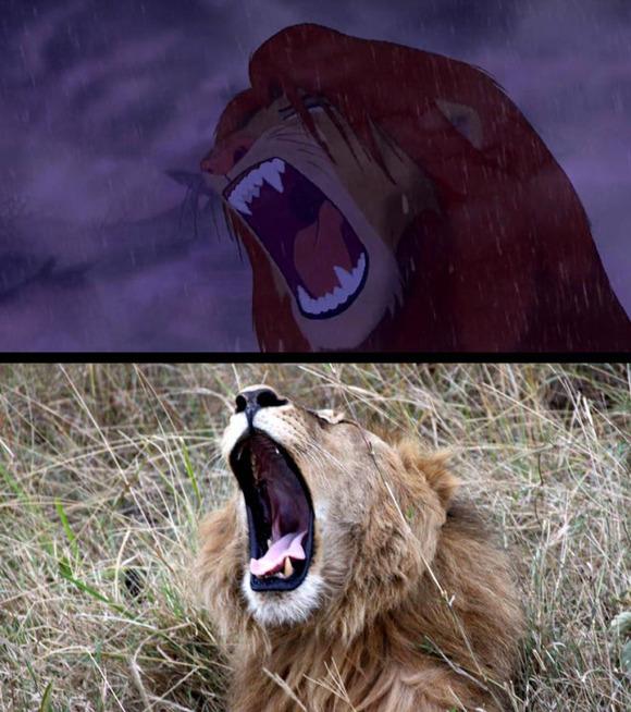 real-life-lion-king-brandon-heuser-4