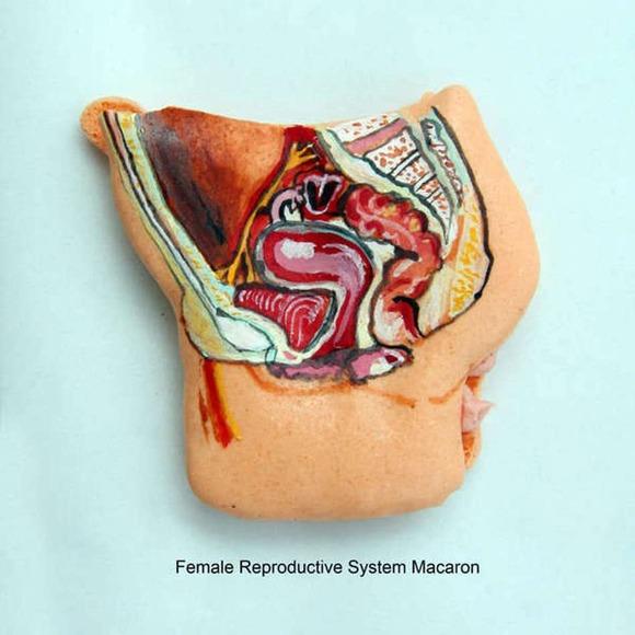 anatomical-macarons