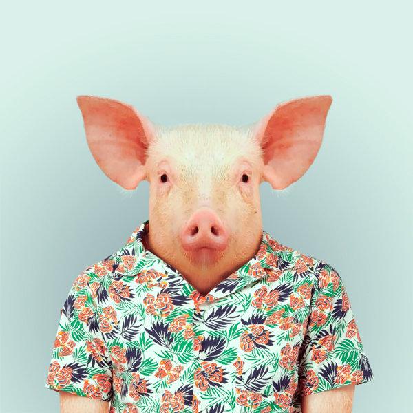 14-animal-portrait-photography