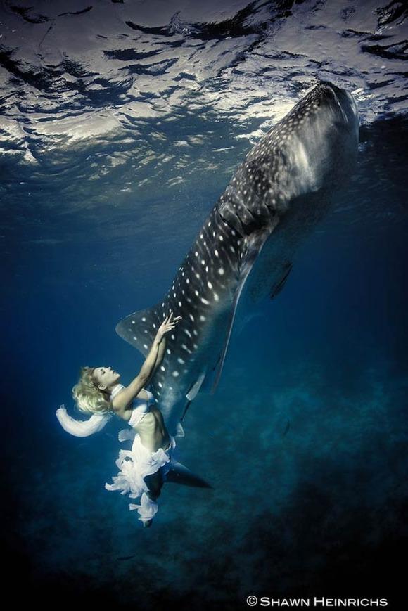 Shawn-Heinrichs-photography-underwater-4