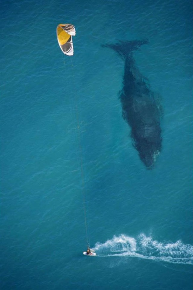 kite-surfing-with-whale-below-aerial-shot-from-above