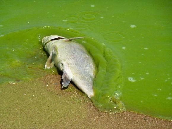 lake-erie-algae-2[2]