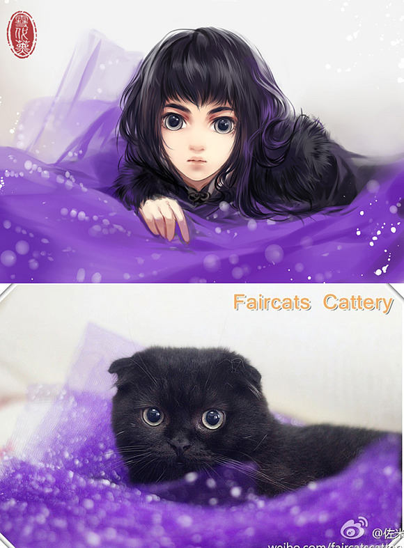 cats-anime-ladies-02