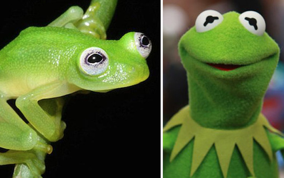 kermit-in-real-life0