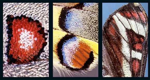 butterflyalphabet3