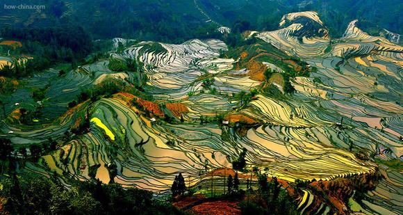 terraced-rice-fields-26__880
