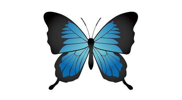 東大秘蔵の昆虫標本が凄すぎる