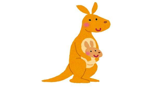 オーストラリア人がカンガルーの玉袋を加工して小銭入れにする