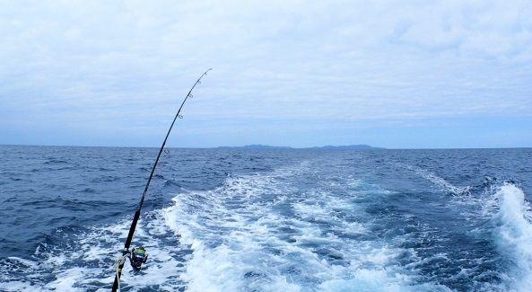 釣りたての太刀魚が本物の太刀みたいな美しさだと話題に