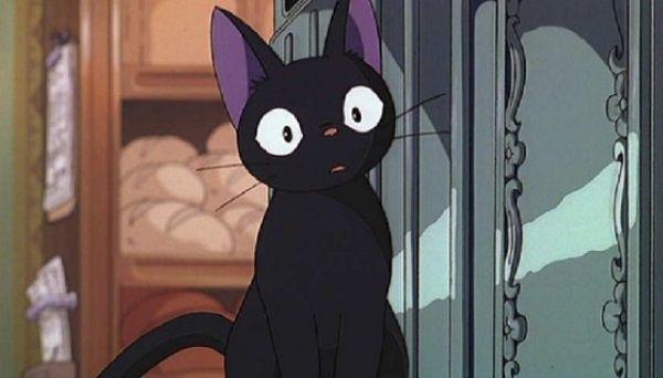 黒猫はインスタ映えしないため手放す人が急増中