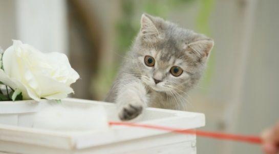 「猫が可愛いのは子猫の間だけ」という人に対する反論
