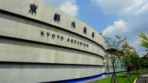 京都水族館が来場者の恋の悩みに全力で答えた結果