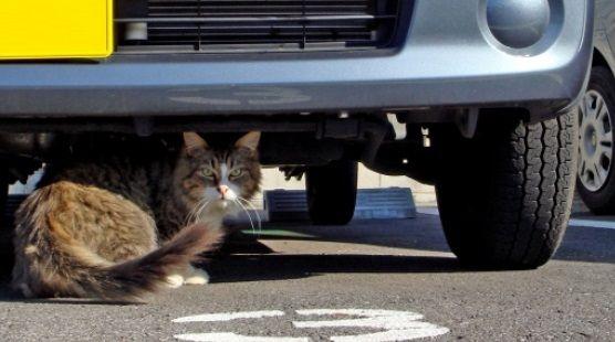 猫キチガイの父親が廃車で作った「猫ホイホイ」が凄すぎる