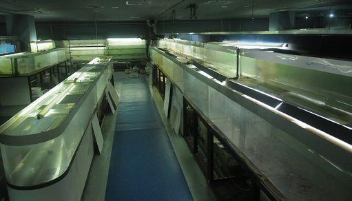 去年閉館した東京タワー水族館にいた魚たちのその後を調べた結果