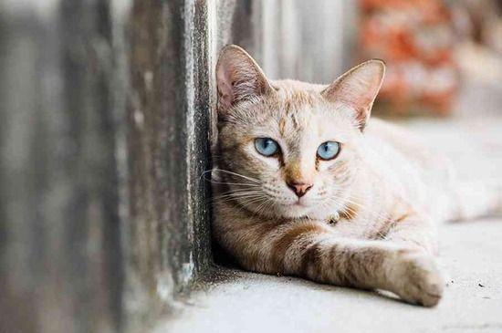 オーストラリア政府、毒入りソーセージを飛行機から撒き野良猫200万匹を駆除へ・・・・