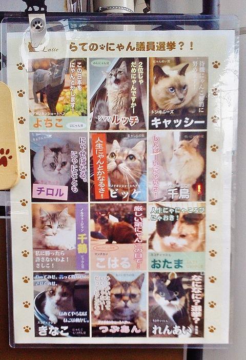 猫カフェ (2)