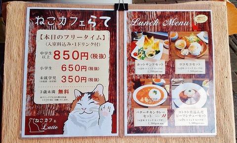猫カフェ (3)