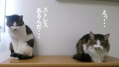 ギャーコ&すみれ①