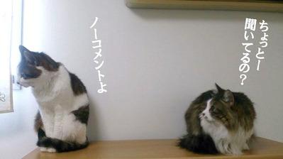 ギャーコ&すみれ⑤