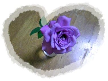 我が家で咲いたミニバラを…♪