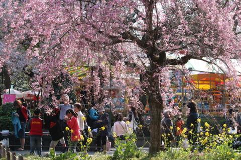 上野公園・桜14