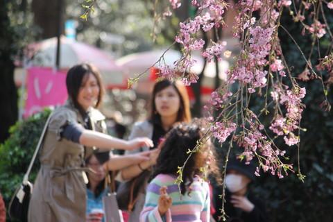 上野公園・桜11