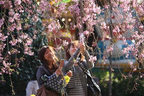 上野公園・桜15
