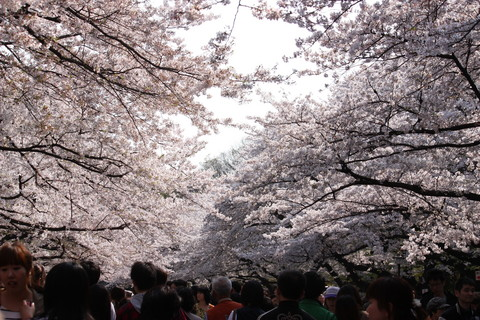 上野公園・桜16