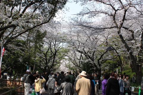 上野公園・桜1
