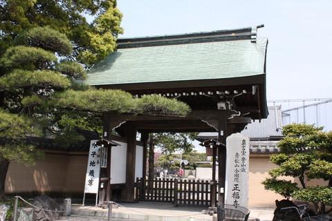 正福寺・八重桜8